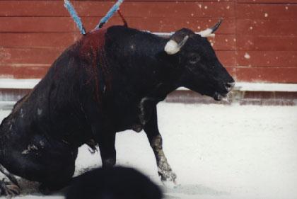 bullfight1.jpg (19118 bytes)