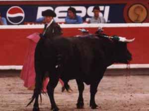 bullfight11.jpg (11059 bytes)