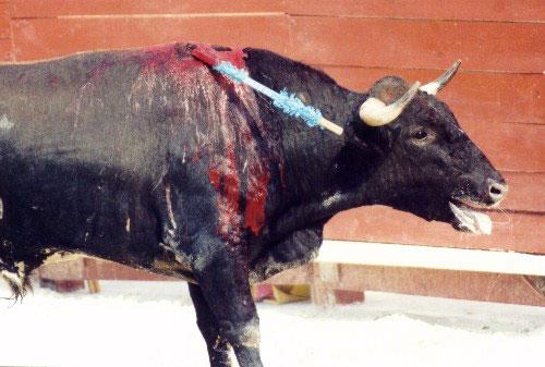 bullfight3.jpg (45039 bytes)