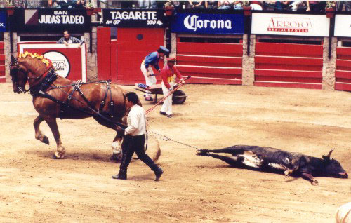 bullfight35.jpg (58677 bytes)