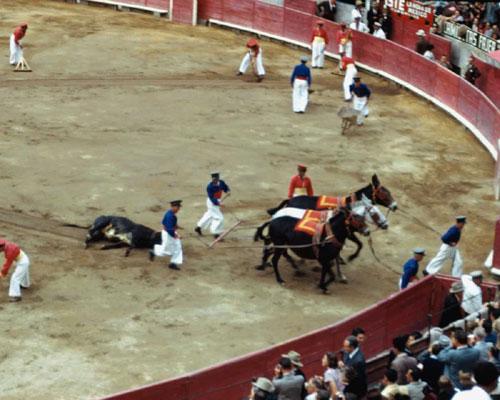 bullfight36.jpg (52982 bytes)