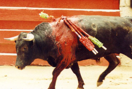 bullfight4.jpg (48910 bytes)