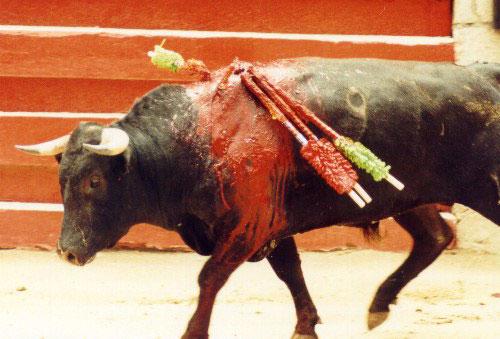 bullfight4.jpg (48910 bytes)