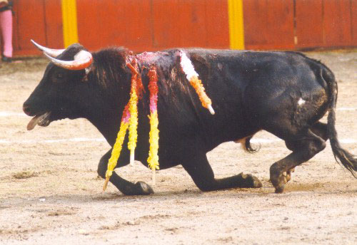 bullfight5.jpg (48404 bytes)