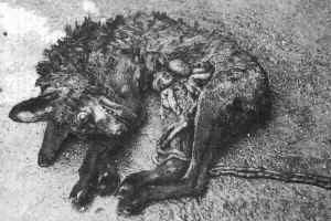 foxhunt3.jpg (13063 bytes)