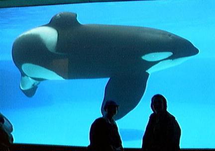 orca10.jpg (20056 bytes)