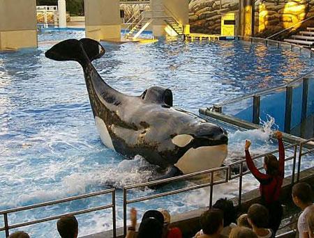 orca15.jpg (62881 bytes)