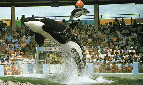 orca26.jpg (63585 bytes)