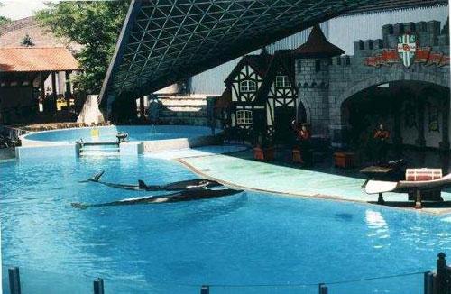 orca33.jpg (53079 bytes)