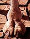 camel_hoof_3.jpg (10461 bytes)
