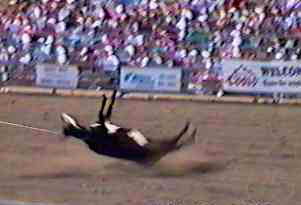 rodeo25.jpg (11590 bytes)