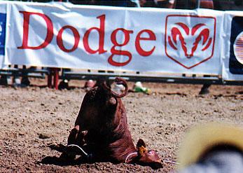 rodeo51.jpg (41110 bytes)