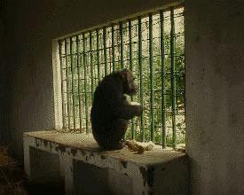 zoo24.jpg (17409 bytes)